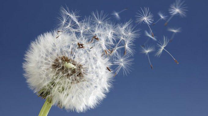 La Naturopathie Pour Votre Bien-être